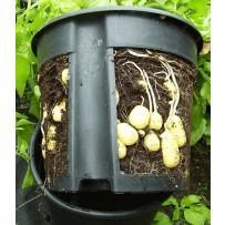 Lonec za vzgojo krompirja na balkonu ZADNJI KOS
